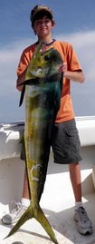 Dorado Fishing, Cheap Fishing charters, Texas Bay fishing trips